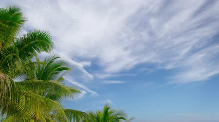 clima tropical : Video 4k - Distant cirrus clouds drift slowly in the background as palm leaves hang motionless in the still. tropical air. Stock Footage