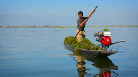 subsistence : INLE LAKE. SHAN STATE. MYANMAR - CIRCA JAN 2014: Burmese boatman poling his motorized canoe in the shallow waters of Inle Lake with a cargo of water grass. Stock Footage
