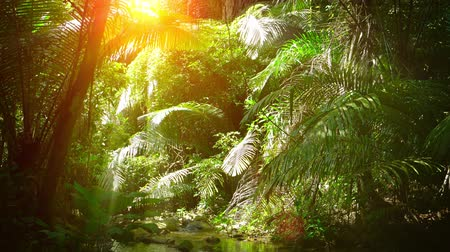 peaceful : Rays of golden sunshine beaming down between the fronds of palm trees. illuminating a peaceful. natural stream in a tropical. Southeast Asian wilderness area. Video UltraHD
