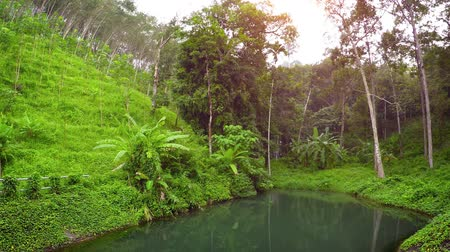 partially : Dense. tropical vegetation partially obscures a safety railing separating an engineered nature trail from a natural pond in a Southeast Asian wilderness area. Stock Footage
