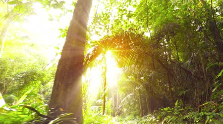 on nature : Bright sunshine glares through the fronds and branches of palms and other tropical trees. illuminating the dense ground cover along a jungle nature trail. Stock Footage