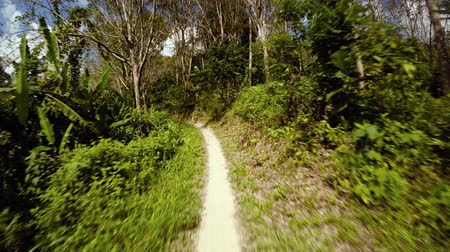 klipek : Slow motion clip of a trip along a narrow. tropical nature trail on a sunny day. with dense greenery on both sides. Video UltraHD