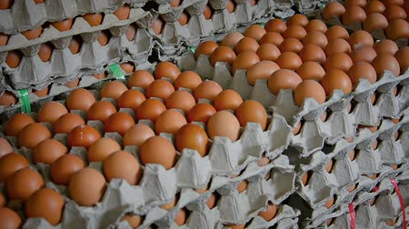 aninhada : Hundreds of brown chicken eggs stacked in nested cardboard trays for sale in an Asian public market. Stock Footage