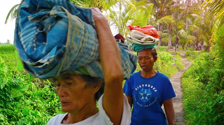 machete : UBUD. BALI. INDONESIA - CIRCA JUL 2015: Local laborers carrying cargos on their heads on a Balinese farm. Video 4k Stock Footage