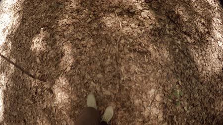stomping : Legs and feet of a hiker. stepping and crunching over the dry leaves on the forest floor. with sound. Video 4k