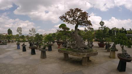 аккуратный : DALAT. VIETNAM - CIRCA JAN 2016: Many bonsai trees on concrete pedestals at Flower Garden Park. Video 4k