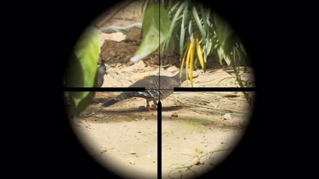 поразительный : Tracking wild birds through the targeting reticle of a rifle scope. followed by a gunshot sound and a sudden blurring. Стоковые видеозаписи