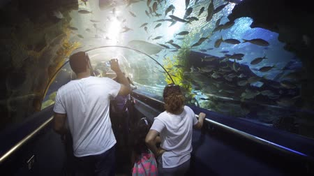 délkelet Ázsia : KUALA LUMPUR. MALAYSIA - CIRCA MAR 2017: Family enjoying a trip through the underwater tunnel at Aquaria KLCC. UltraHD 4k footage