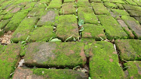 polonnaruwa : Grass and weeds poke up between moss encrusted brick pavers at a park in Polonnaruwa. Sri Lanka. FullHD 1080p video