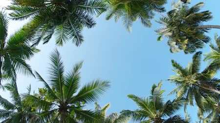 improvised : Improvised frame from palm trees crowns and clear sky. 4k UltraHD video