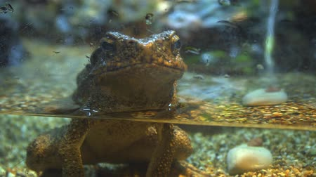 terrarium : Adorably sad. pet frog. trapped in a glass terrarium and pining for the wilderness. Video 1920x1080