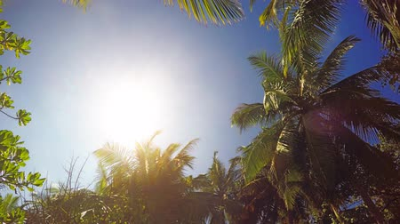 coconut palm tree : Tropical. noon day sun shines down through a gap in the palm trees on this remote island in the Maldives. 4k Ultra HD video Stock Footage