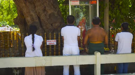 worshipers : KATARAGAMA. SRI LANKA - DEC 2016: Worshippers Praying before a Hindu Altar on the Grounds of Kataragamam Temple. Video 1080p