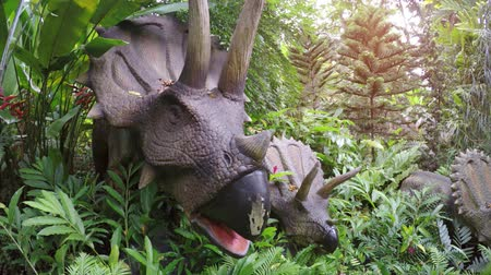 triceratops : SINGAPORE - CIRCA MAY 2017: Triceratops family an educational park in Singapore. UltraHD 4k video