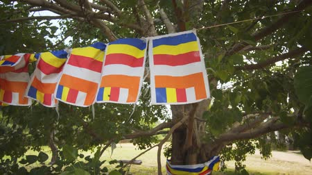 polonnaruwa : Representative flag of Buddhism. hanging from a string. wrapped around an ordained tree in a rural community in Sri Lanka. 4k Ultra HD video Stock Footage