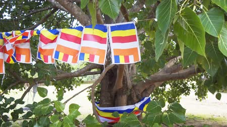 polonnaruwa : Flags of Buddhism on the sacred tree. Sri Lanka. Polonnaruwa. FullHD stock footage