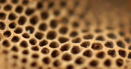 крошечный : Porous. Spongy. surface of a wild mushroom. with its hexagonal structure of holes. in extreme closeup.