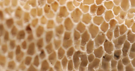 mycology : Geometric structural pattern of holes on the surface of a mushroom. magnified in extreme closeup.