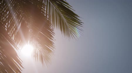 vakok : The sun blinds us through the leaves of the palms. Maldives. 4k Ultra HD video