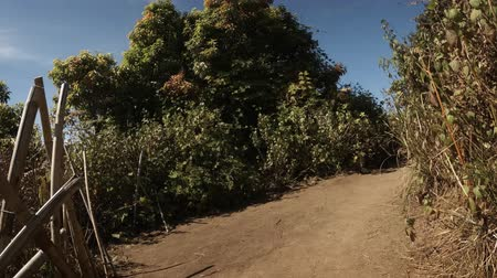 trilha : Hiker perspective of a stroll down a dusty nature trail through low vegetation in this tropical wilderness area near Chiang Mai. Thailand. Stock footage 4k Vídeos