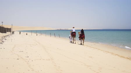 STATE OF QATAR - MAY 2018: Tourists riding camels over desert sand. along the seashore