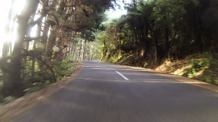 nowa zelandia : Driving in sunset forest. New Zealand, Southern Island Wideo