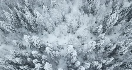 Aerial flight above winter forest on the north of Russia Stock Footage