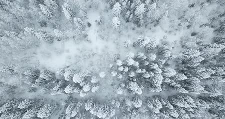 Directly above view of snow trees Stock Footage