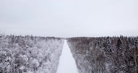 Fly over the forest covered the snow Stock Footage