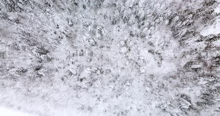 Aerial top down view of the fir forest covered the snow Stock Footage