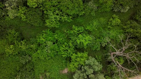 meseország : Drones Eye View - 4K aerial top down view of woodland mysterious landscapes