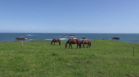 otlama : horses grazing on green field near ocean in Asturias Spain