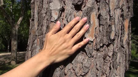 деревья : woman hand touching trunk cork tree at a park in Madrid