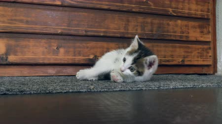 front door : A cute playful little kitten cat discovering the environment in front of a door.