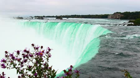 Horseshoe Falls closeup view with wild flower in Canada.