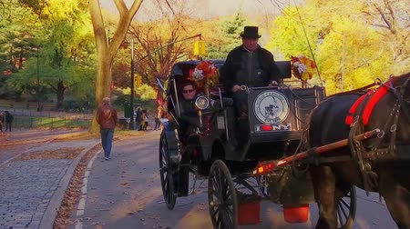 lő : NEW YORK CITY, USA - OCT 30, 2018: Horse Carriage in Central Park slow motion in Autumn Midtown Manhattan in New York City.
