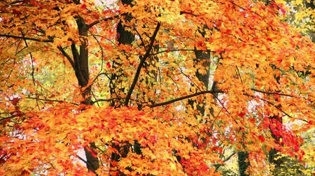 Autumn foliage background view with beautiful colors.