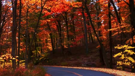 Autumn road with beautiful foliage in woods. Dostupné videozáznamy