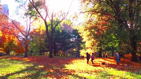 Central Park in Autumn in sunny day with beautiful foliage in midtown Manhattan New York City