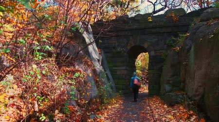 ミッドタウン : Walk in Central Park in Autumn with foliage in Midtown Manhattan New York City 動画素材