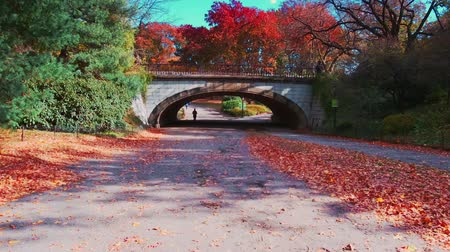 Walk in Central Park in Autumn with foliage in Midtown Manhattan New York City Dostupné videozáznamy