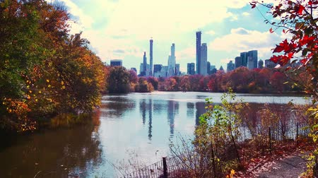 ミッドタウン : Central Park walk view in Autumn with foliage in Midtown Manhattan New York City 動画素材