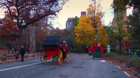 américa central : NEW YORK CITY, USA - OCT 30, 2018: Horse Carriage in Central Park in Autumn Midtown Manhattan in New York City.