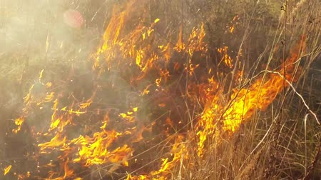 çim : burning dry grass and bushes, fire in the steppe, prairie and savanna