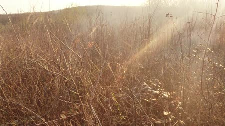 повреждение : sun shines through the smoke and fire, burning dry grass and bushes in early spring or late fall