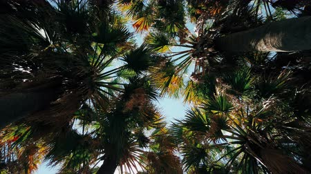 Green Palm Tree Leaves On Blue Sky Стоковые видеозаписи