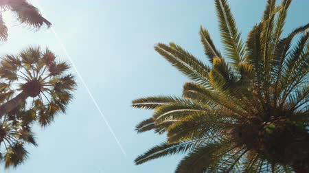 Green Palm Tree Leaves On Blue Sky In Barcelona, Spain