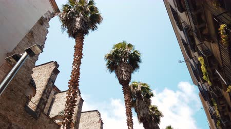 Palm Tree Leaves On Blue Sky In Barcelona, Spain