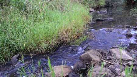 natura : Small stream in the nature Wideo