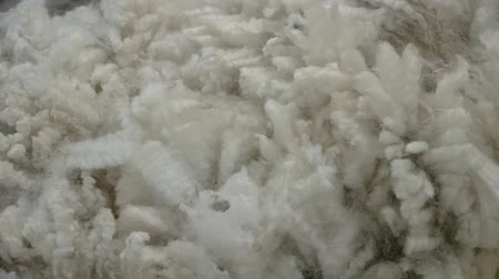 wełna : Abstract background texture of crossbred strong wool. Wideo